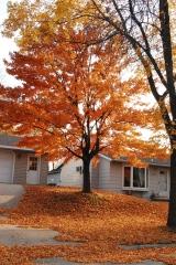 Changing leaves, fall foliage, Minnesota